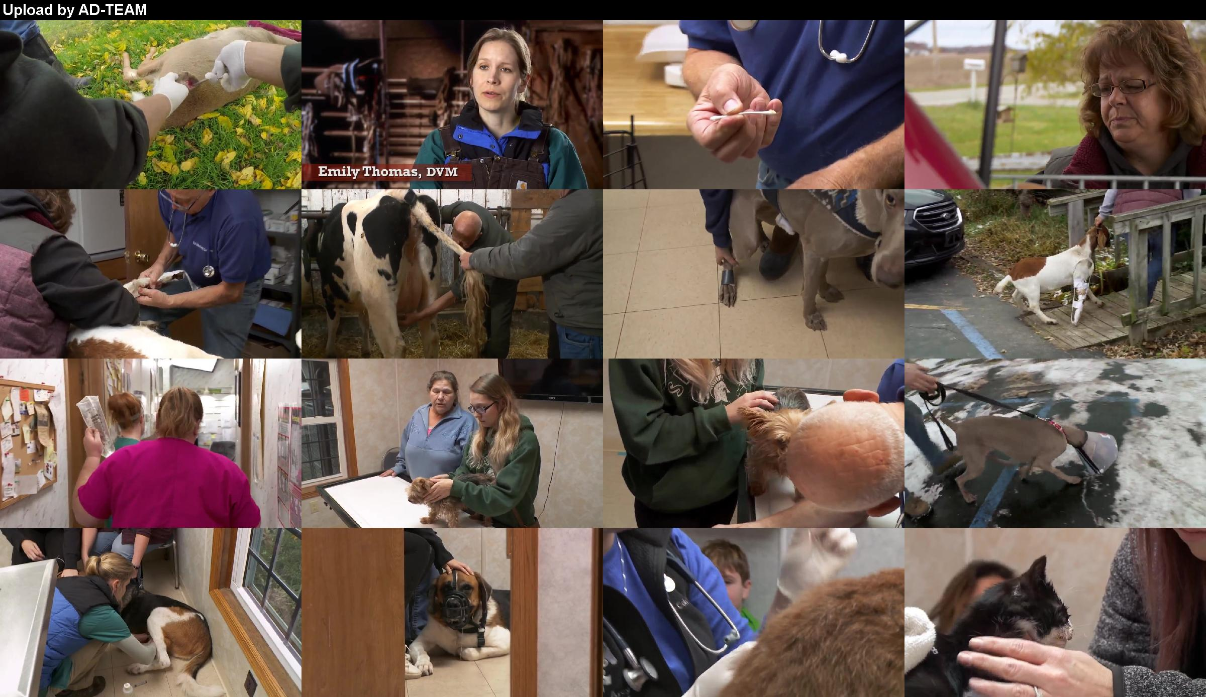 The Incredible Dr Pol S15e07 Frankly My Deer Web X264-caffeine