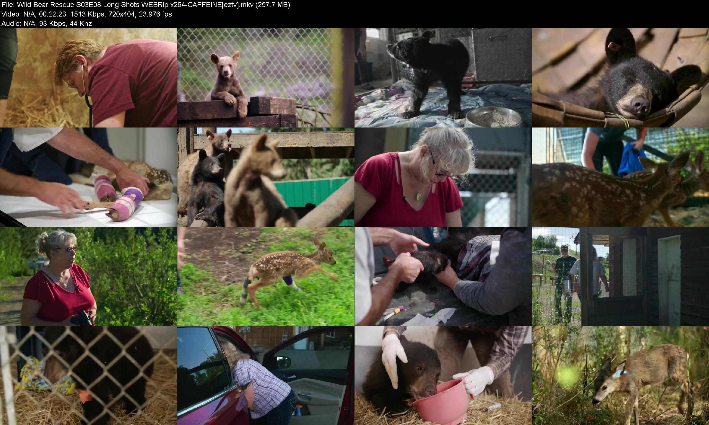 Wild Bear Rescue S03e08 Long Shots Webrip X264-caffeine