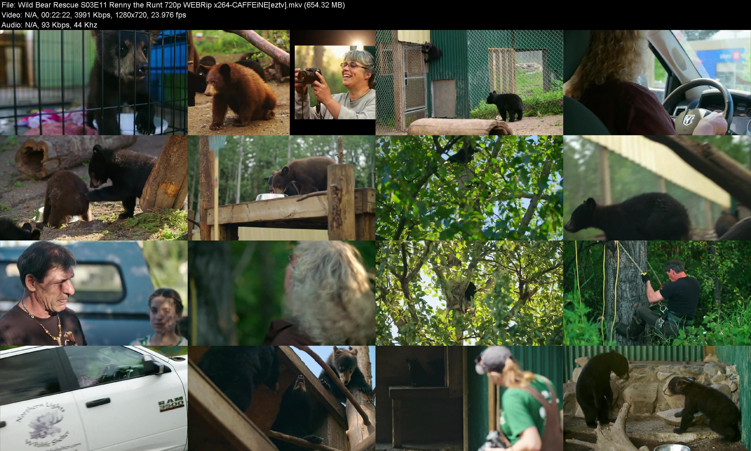 Wild Bear Rescue S03e11 Renny The Runt 720p Webrip X264-caffeine