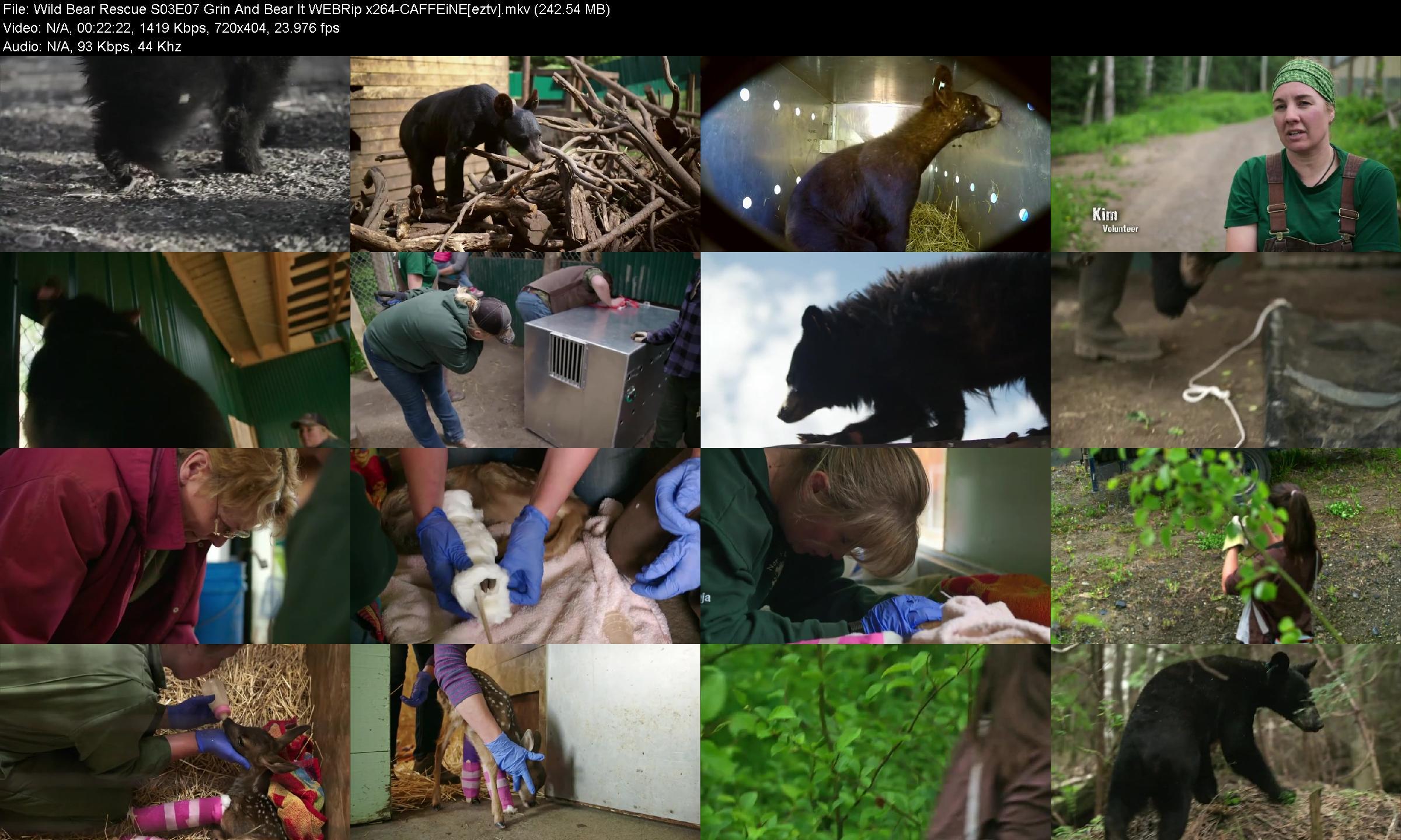 Wild Bear Rescue S03e07 Grin And Bear It Webrip X264-caffeine