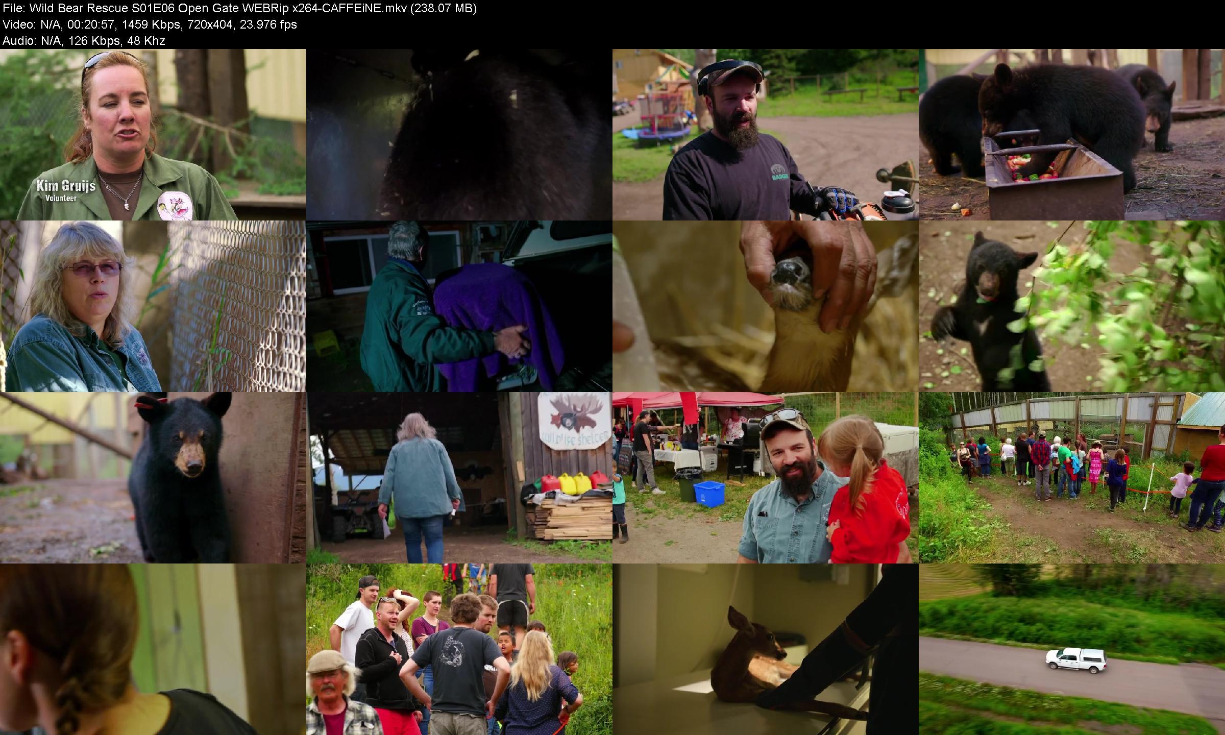 Wild Bear Rescue S01e06 Open Gate Webrip X264 caffeine